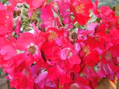 ドルトムントの花束