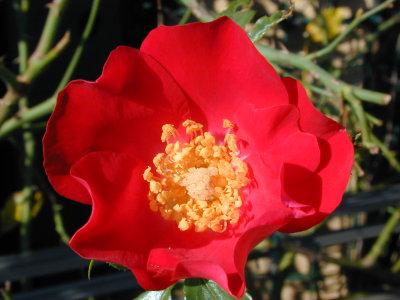ドルトムントの秋の花