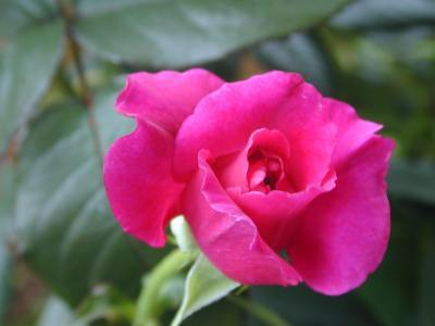 イントゥリーグの花