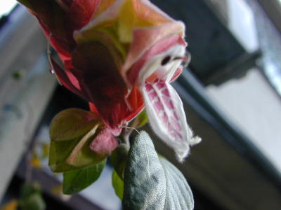 こっちは花